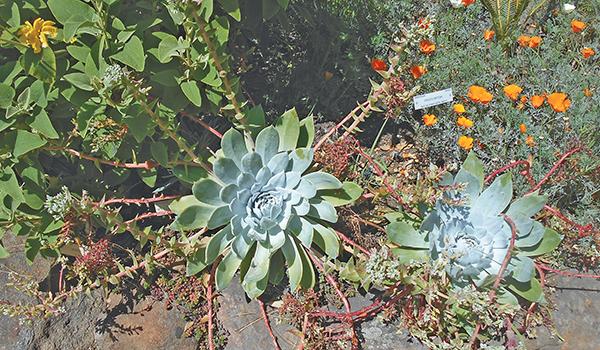 University of California Botanical Garden at Berkeley - Your Town ...