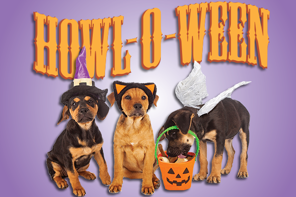 Walnut Creek Halloween Events