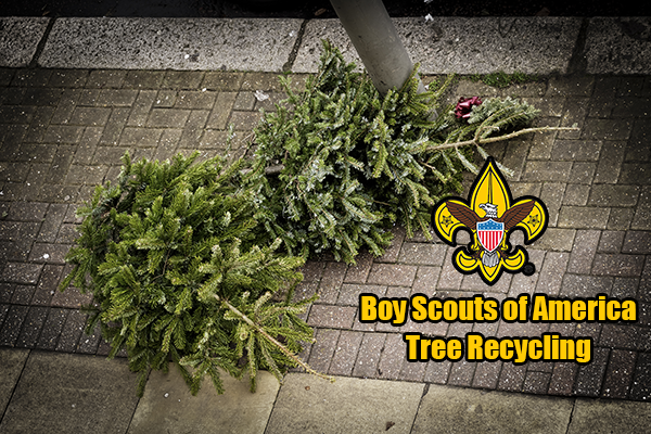 Fairfield Boy Scouts Offering Christmas Tree Recycling - Your Town ...