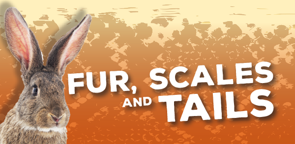 Fur, Scales & Tails