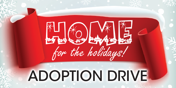 Adoption Drive