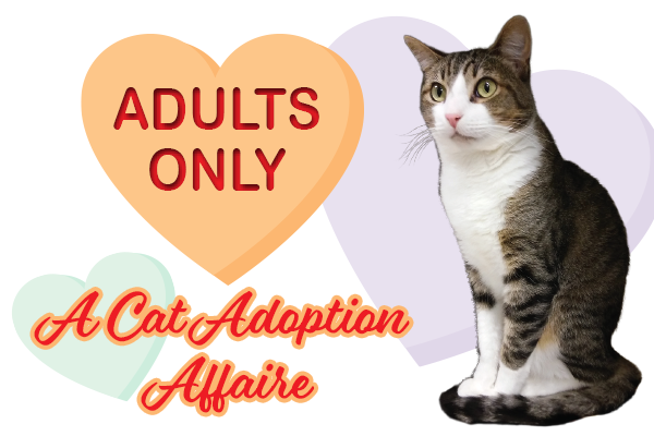 Adults Only: A Cat Adoption Affaire - Your Town Monthly