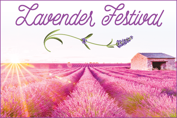 Lavender festival Araceli Farms